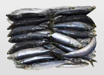 Freshly Frozen Sardines (top view)